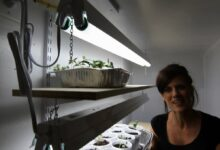 Photo of Video: How to Make a Grow Light Closet for Veggie Seedlings