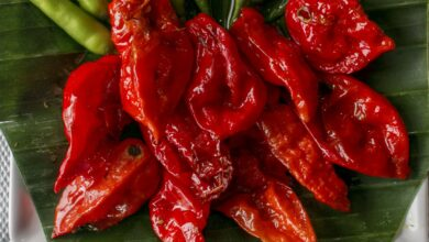 Photo of New Research Shows Planting Insanely Hot Peppers Can Solve Your Rodent Problems