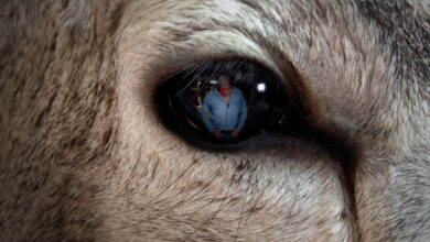 Photo of Whitetail Vision 101: What Can Deer Actually See?