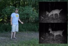 Photo of Video Test: Can You Use Human Urine to Attract Deer?