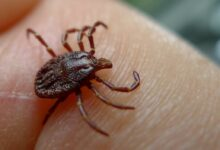 Photo of Video: 7 Ways to Prevent Tick Bites while Hunting, Fishing and Camping