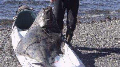 Photo of Video: The Story Behind the World Record Kayak Halibut
