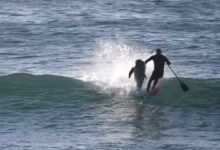 Photo of Video: Dolphin Smashes Into Very Unlucky Paddleboarder