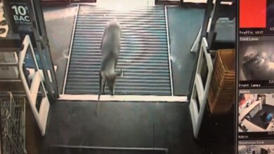 Photo of Video: Security Camera Captures Deer Running Into Michigan Best Buy