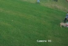 Photo of Video: Security Camera Captures Coyote Attacking Toddler in Backyard