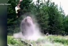 Photo of Video: Charging Bison Launches 9-year-old Girl into the Air