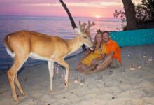 Photo of Deer Crashes Scenic Sand Dunes Wedding Proposal