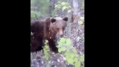 Photo of Video: Russian Man Harasses Wild Bear and Get's What's Coming