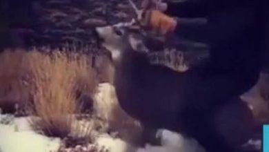 Photo of Teen caught on video riding mule deer buck