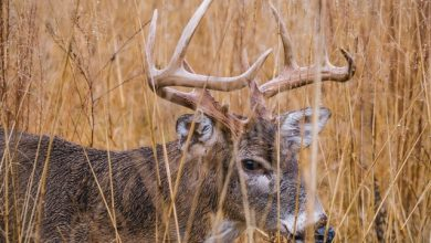 Photo of 5 Traditional Deer Hunting Tips That Work in 2020