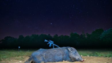 Photo of America's Feral Hog Problem