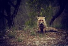 Photo of Alabama to allow night hunting of feral hogs, coyotes